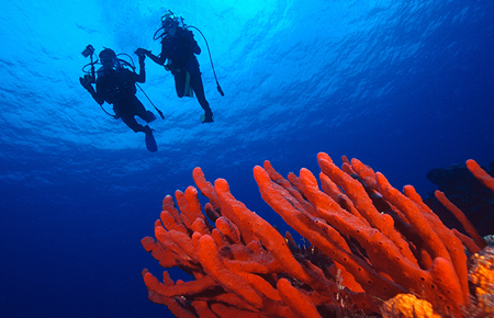 Scuba Diving Excursions to Isla Catalina